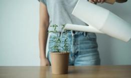 Drink It - Plant It