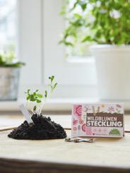 """Die Stadtgärtner - Steckling """"Wildblumen"""""""