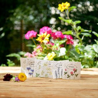 BIO Samenkärtchen für Kinderbuch Emi Brillenbiene